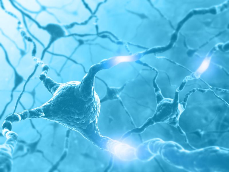 Study: Sleep Deprivation May Lead To Loss Of Brain Neurons