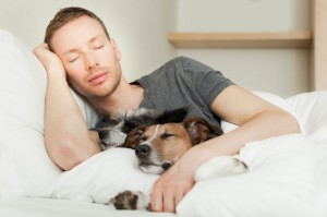 Co-Sleeping With Pets, Is It Really Disruptive?
